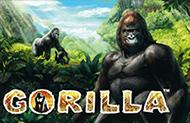 Игровые аппараты Gorilla